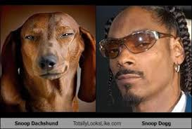 Snoop Meme - snoop dachshund totally looks like snoop dogg memebase funny memes