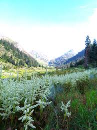 list of california native plants california has some wonderful mountain meadow plant communities
