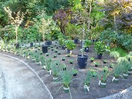 Shade Garden Ideas Interesting Garden Ideas Excellent Interesting Garden Design