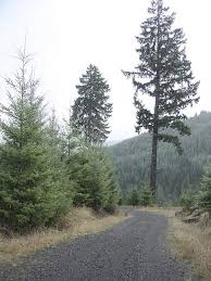 Oregon Forest images Climate change panel urges delay in oregon forest policy decisions jpg&a