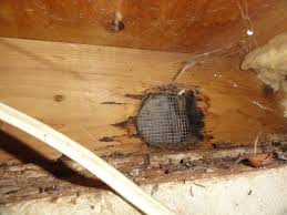 replace repair rotten rim joist with picture building