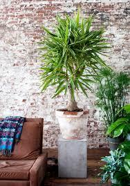 Grose Wohnzimmer Uhren Blumen Für Wohnzimmer Elvenbride Com Pflanzendeko Dekoration