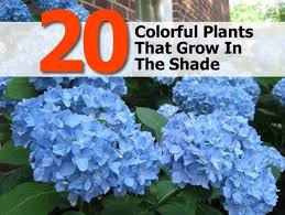 28 outdoor plants that don t need sunlight shade gardening