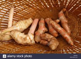 galangal cuisine turmeric curcuma longa root and galangal stock photo
