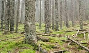 woods man survived wilderness