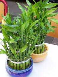 8 Houseplants That Can Survive by 19 Easiest Houseplants You Can Grow Without Care Balcony Garden Web
