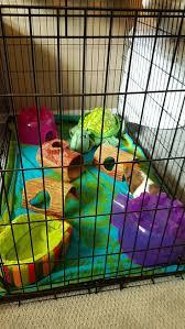 Are Igloo Dog Houses Warm 5202 Best Dog Houses Images On Pinterest Dog Houses Dog Crates