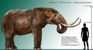 gomphotheres cerca google animali preistorici
