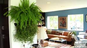 learn how to make your own living wall youtube