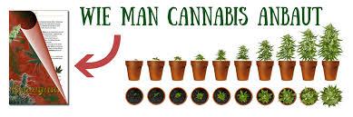 cannabis im garten cannabis growguide zum hanfsamen pflanzen