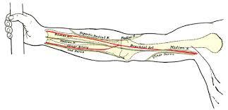 Foot Vascular Anatomy Vascular Anatomy Of The Forearm