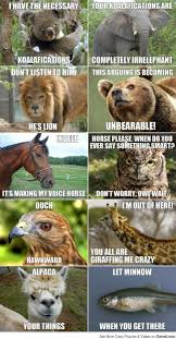 Meme Conversation - animal meme conversation hahaha i seriously couldn t stop