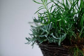 Best Inside Plants How To Best Care For Indoor Plants Sa Garden And Home