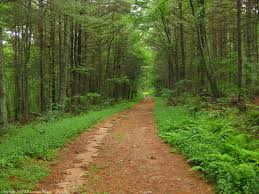 Rhode Island forest images 5 hiking trails you must try in rhode island jpg