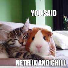 Rodent Meme - netflix and chill memes popsugar australia tech