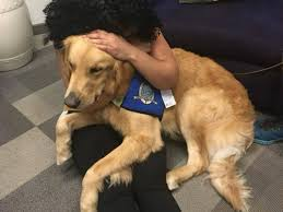 Comfort Golden Dogs Offer Comfort To Las Vegas Survivors