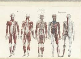 Body Anatomy Back Historical Anatomies On The Web Browse Titles