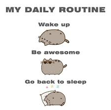 Daily Meme - my daily routine pusheen know your meme