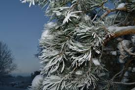 free images branch snow cold winter white frost ice