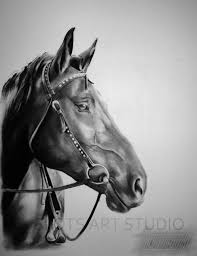 realistic horse face sketches drawing of sketch