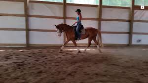 training horses that want to work part 2