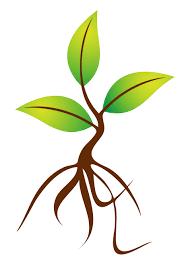 tree sapling clipart 13