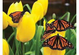pictures of flowers and butterflies 8468 free downloads