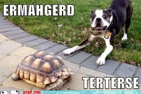 Ermahgerd Animal Memes - hurr durr derp face ermahgerd ert hers a sherll ermahgerd