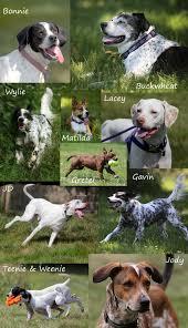 illinois birddog rescue current news