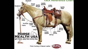 Horse Saddle by How To Western Saddle Your Horse Bridle Horse Halters Horse