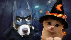 animals in halloween costumes youtube