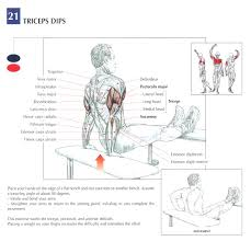 bench dips muscles worked for gym fitness bench pinterest