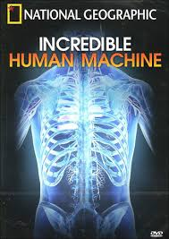 Anatomy And Physiology Introduction To The Human Body Anatomy And Physiology Movies