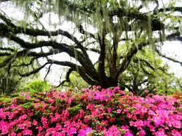 Botanical Gardens South Carolina Myrtle Historical Gardens Highlight The Of South Carolina
