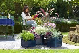 herbstbepflanzung balkon das grüne medienhaus pflanzen im herbst blüten blätter und