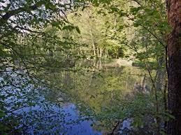 Baden Schwaben Im Schwäbischen Wald Zwischen Lorch Und Alfdorf Urlaubsland