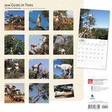 goats in trees calendar 2018 calendar club uk