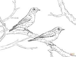 bluebird coloring pages design animal eastern bird american