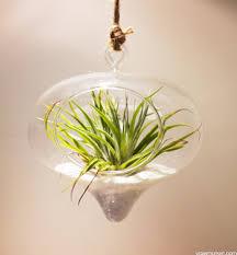 heart shaped teardrop glass hanging terrarium vase market