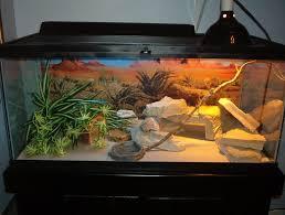 40 gallon terrarium page 3 fallcreekonline org