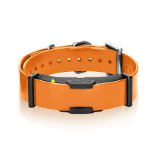 Radio Collar For Beagle Dogtra Remote Training Collars For Training Hunting Dogs