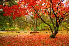 related image autumn landscaping tehran iran