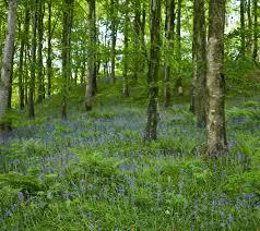 irish native plants gardening 101 the best of irish wildflowers chadwicks blog