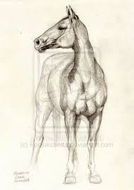 best 25 horse sketch ideas on pinterest horse drawing tutorial