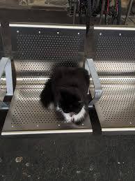 cat waiting for the train on a bench in england rebrn com