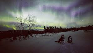 northern lights canada 2017 19 amazing photos and videos of the northern lights across canada