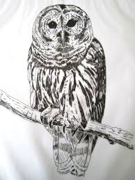 barbara strobel lardon art quilts barred owl sketch
