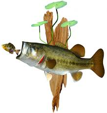largemouth bass mounts by king sailfish mounts largemouth bass mounted on driftwood