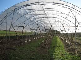 ufo cherries cloud mountain farm center blog