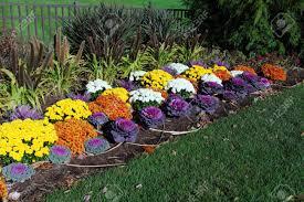 colorful flower garden with ornamental kale chrysanthemum fox